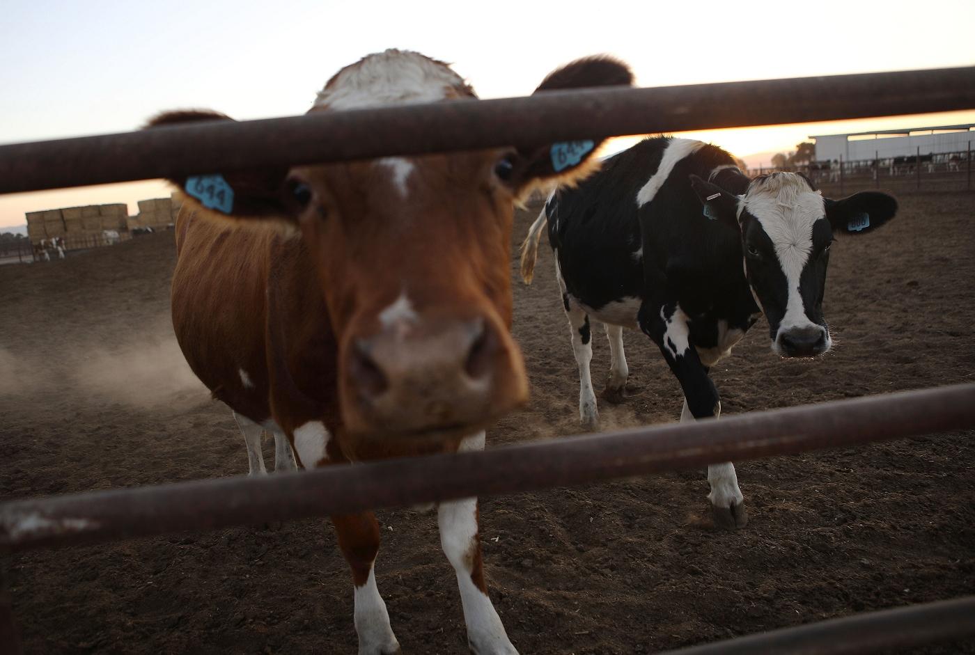 https://www.centroveterinariosanmartino.it/wp-content/uploads/2019/03/181106-cattle-se-612p_8cebbde64c7fe2e7b6665d0eaa65341f.jpg
