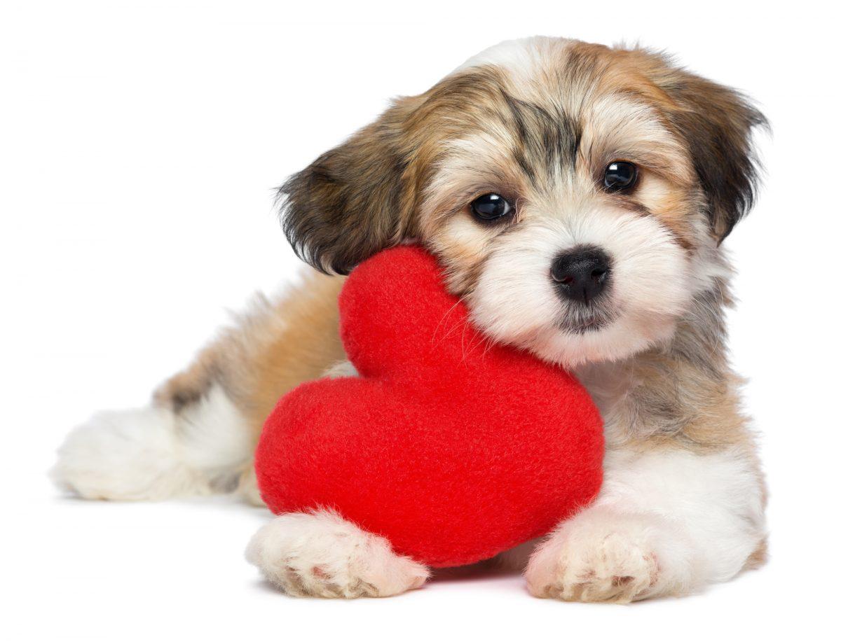 cardiologia-veterinaria-1200x917.jpg