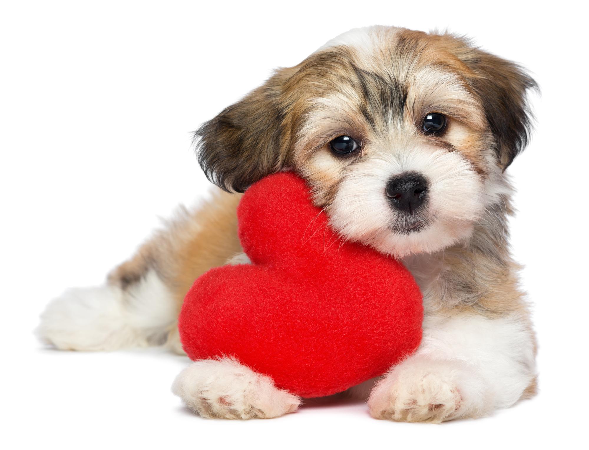 https://www.centroveterinariosanmartino.it/wp-content/uploads/2019/03/cardiologia-veterinaria.jpg