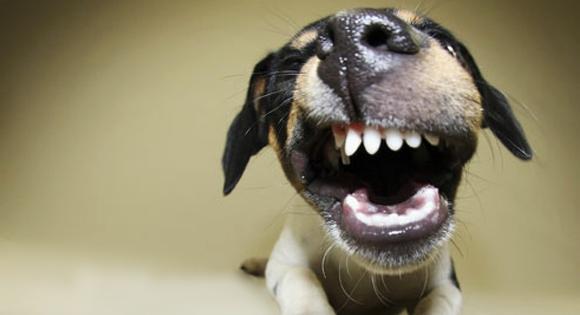 cane-sorriso.jpg