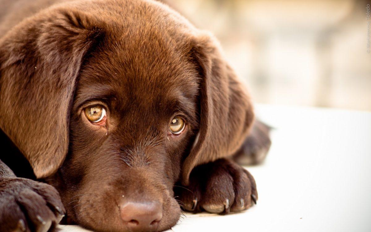 132616-baby-puppy-dog-1200x750.jpg