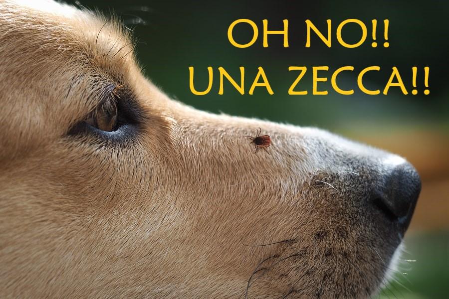 zecche-cane.jpg