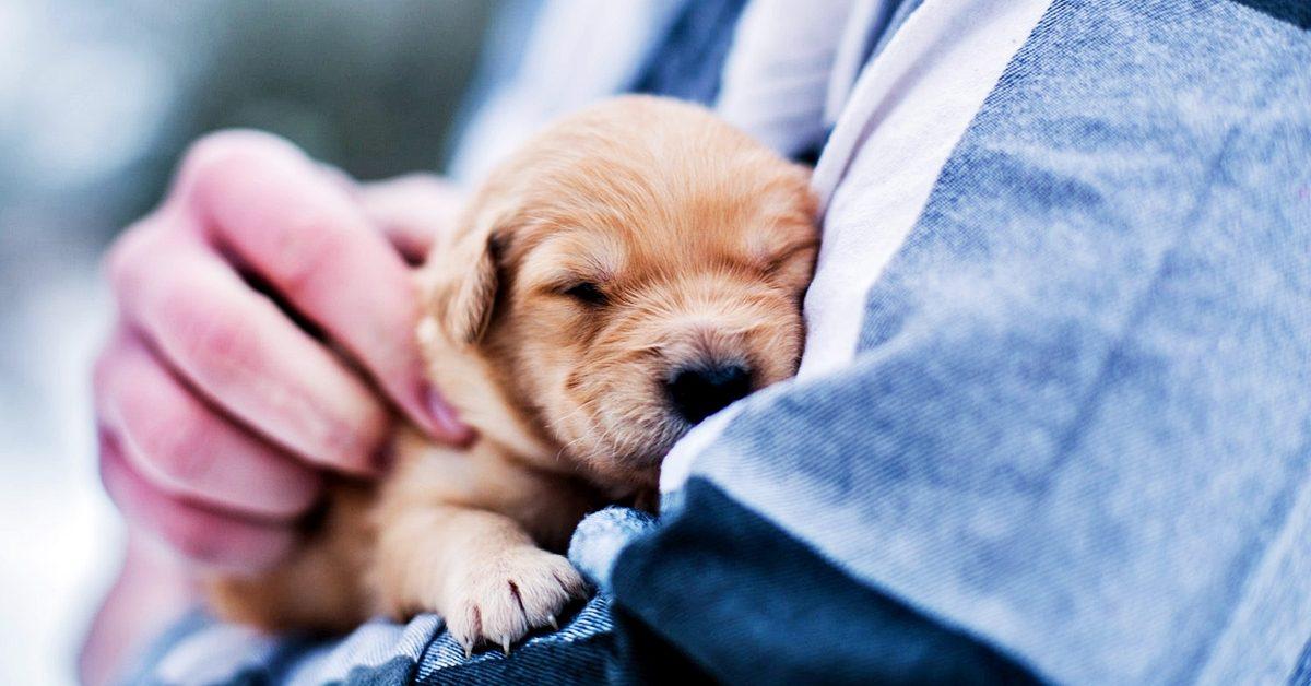 puppy1-1200x628.jpg
