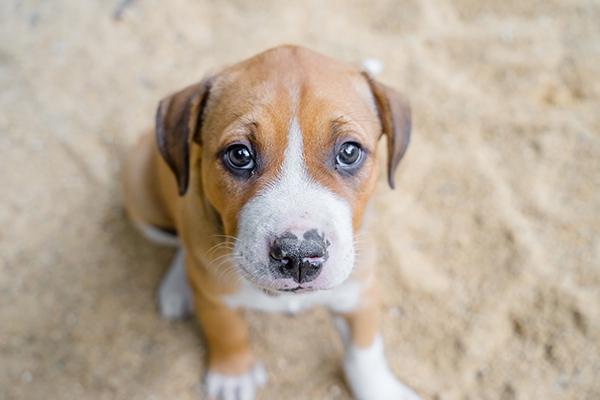 puppypic2.jpg